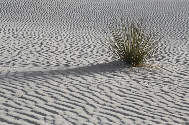 Image of ripples in the sand and a lone plant at White Sands National Monument in New Mexico by Andy Long.