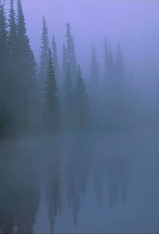 Pine trees and their reflections in the fog near Mt. Rainer in Washington state by Andy Long.