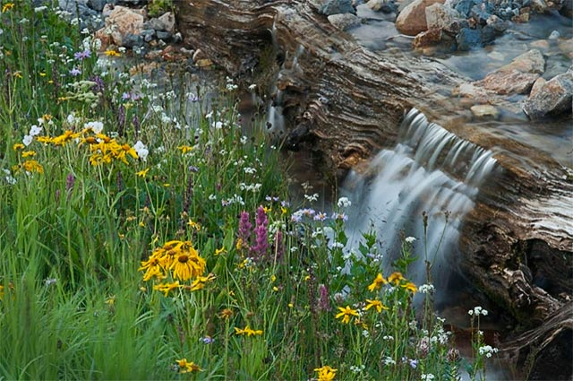 Image of a small waterfall near alpine wildflowers in Colorado by Andy Long.