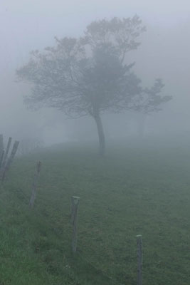 Photo of fence & tree in the fog by Andy Long