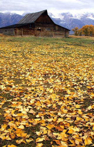 Photo of Autumn leaves and barn by Andy Long