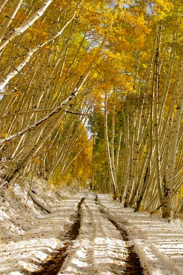 Photo of road between Aspen trees in snow near Telluride, Colorado by Andy Long