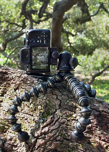"""Image of Joby GorillaPod Focus and Ballhead X attached to the """"Treaty Oak"""" tree at Jesse Ball duPont Park in Jacksonville, Florida by Marla Meier."""