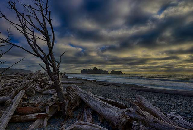 Driftwood strewn on the beach at Olympic National Park, Washington by Michael Leggero.
