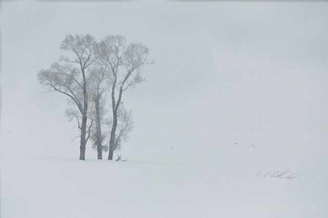Image of three trees in the fog on a field of snow by Andy Long.