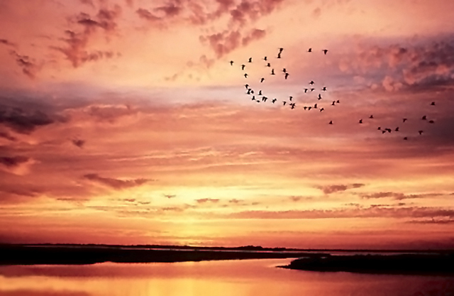 Orange and yellow sunrise reflected on lake with ducks flying in the sky by Willis T. Bird.