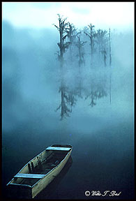 Image of dinghy and trees reflected in water in the fog by Willis T. Bird.