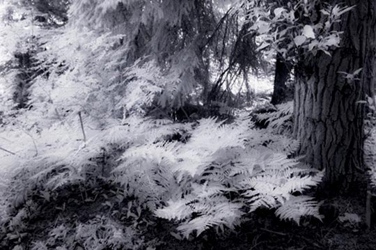 Infrared photo of forest floor by Noella Ballenger