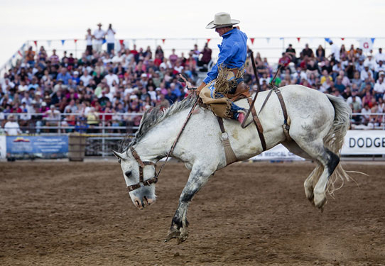 Photo of bronc rider on back of white bucking horse by Brad Sharp.