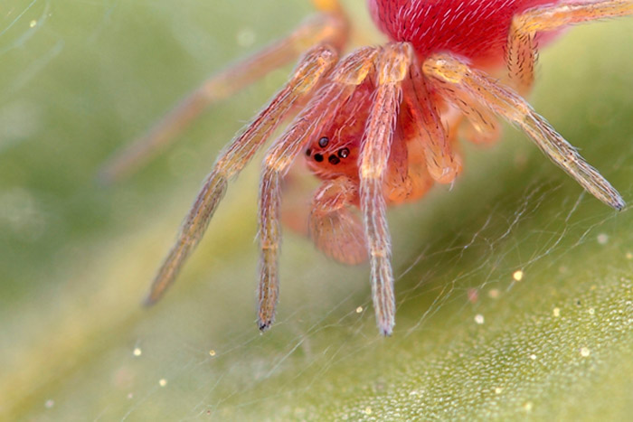 Microphoto of a web-using spider by Huub de Waard.