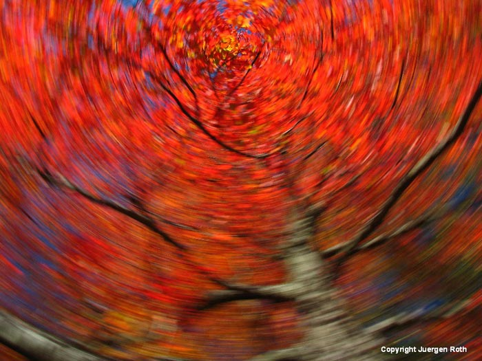 Intentional Camera Movement. Rotating camera movement makes a swirling carousel of a red fall tree by Juergen Roth.