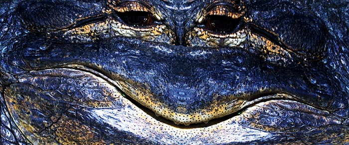 Crazy Face image of alligator using The Austin Method by Jim Austin
