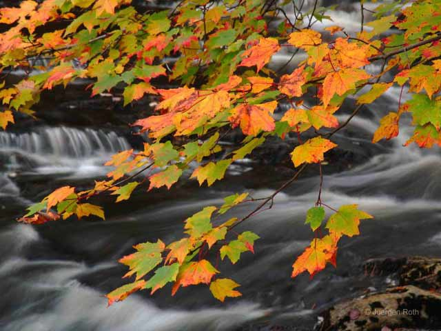 Photo guide to Acadia National Park: Maine fall foliage over silky water effect of flowing stream by Juergen Roth.
