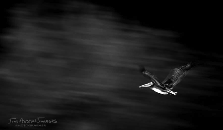 Pelican-Pan-jimagesdotcom