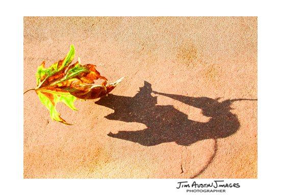 Fall Tips Jim Austin Jimages