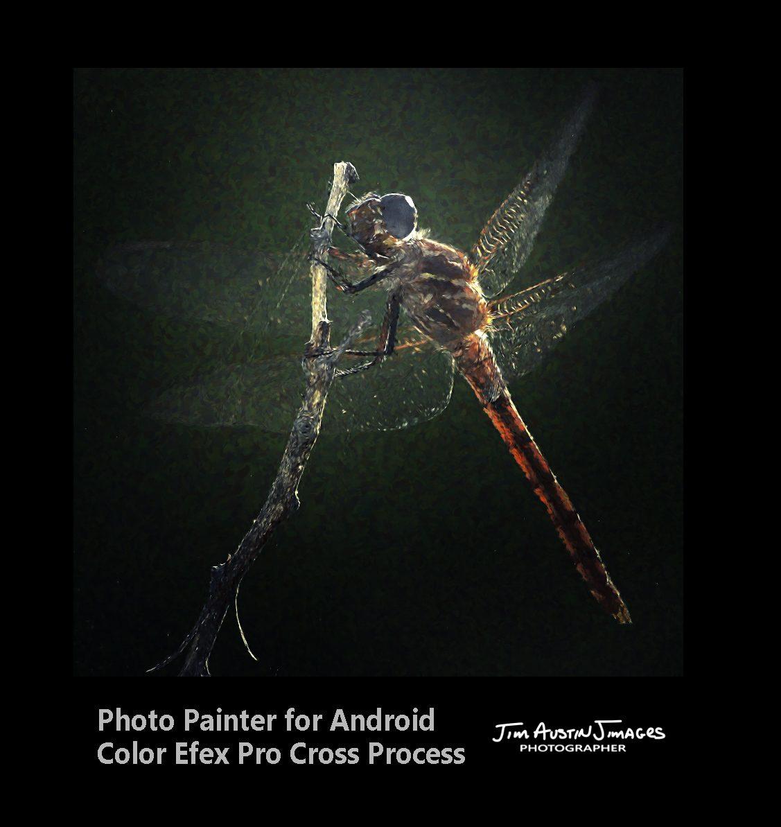 Dragonfly Photo Painter Color Efex Pro Jim Austin Jimages