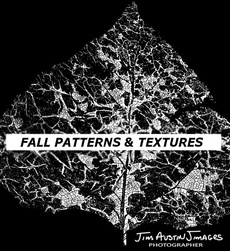 Fall Patterns and Textures Jim Austin Jimages