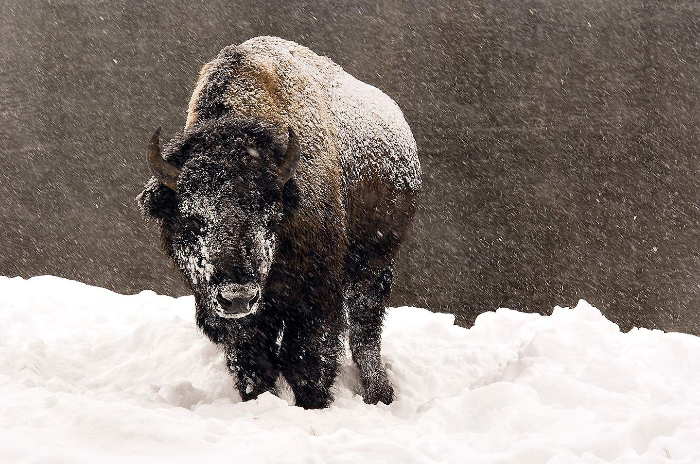 Winter photography Ideas For Nature Photographers   Apogee ...