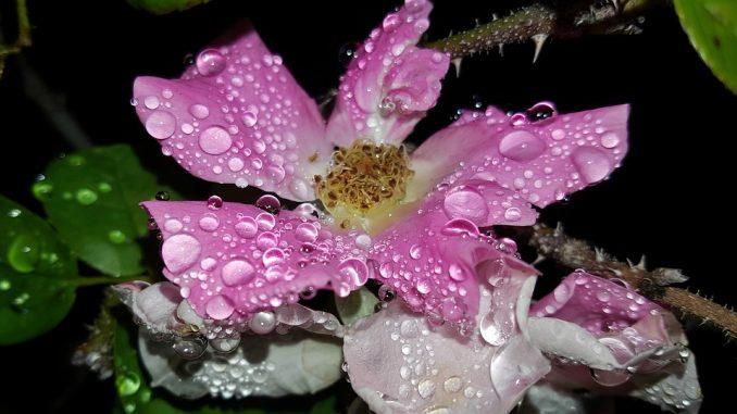 garden-rainfall