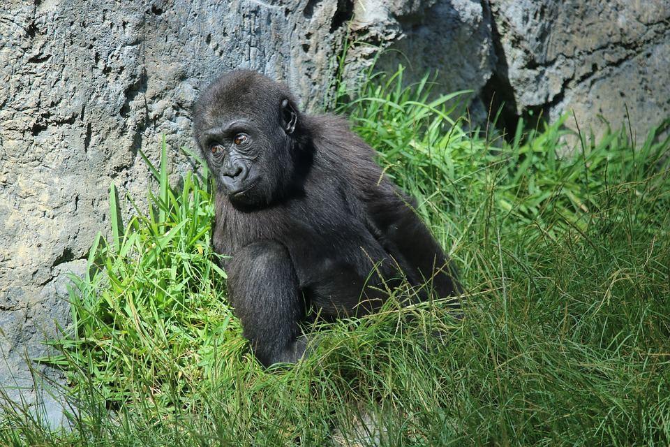 san diego zoo photography