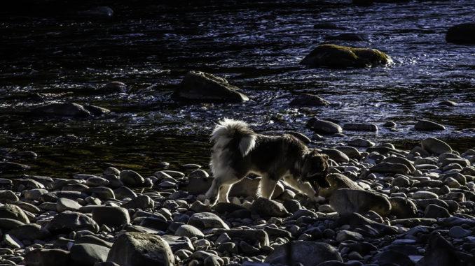 3_dog on the beach