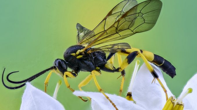 macro-insect