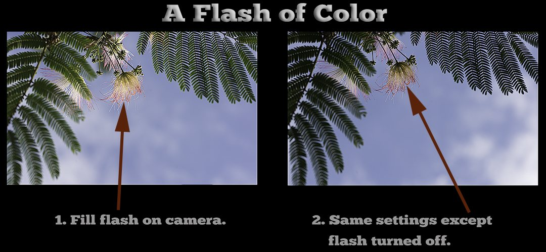 A Flash of Color