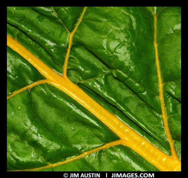 Analogous Example Green Yellow