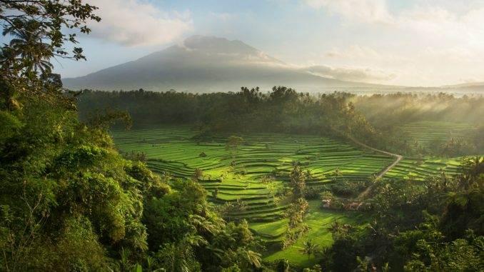 David Lazar - Bali Landscape