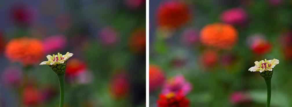 Subjective-Color-Flowers