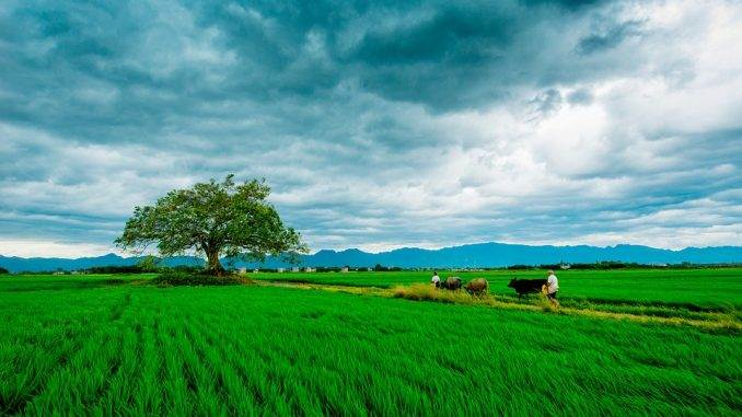 taking a field landscape shot - landscape photography tips for beginners