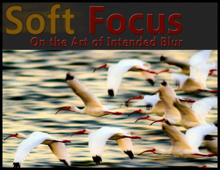 soft focus photography - the art of intended blur