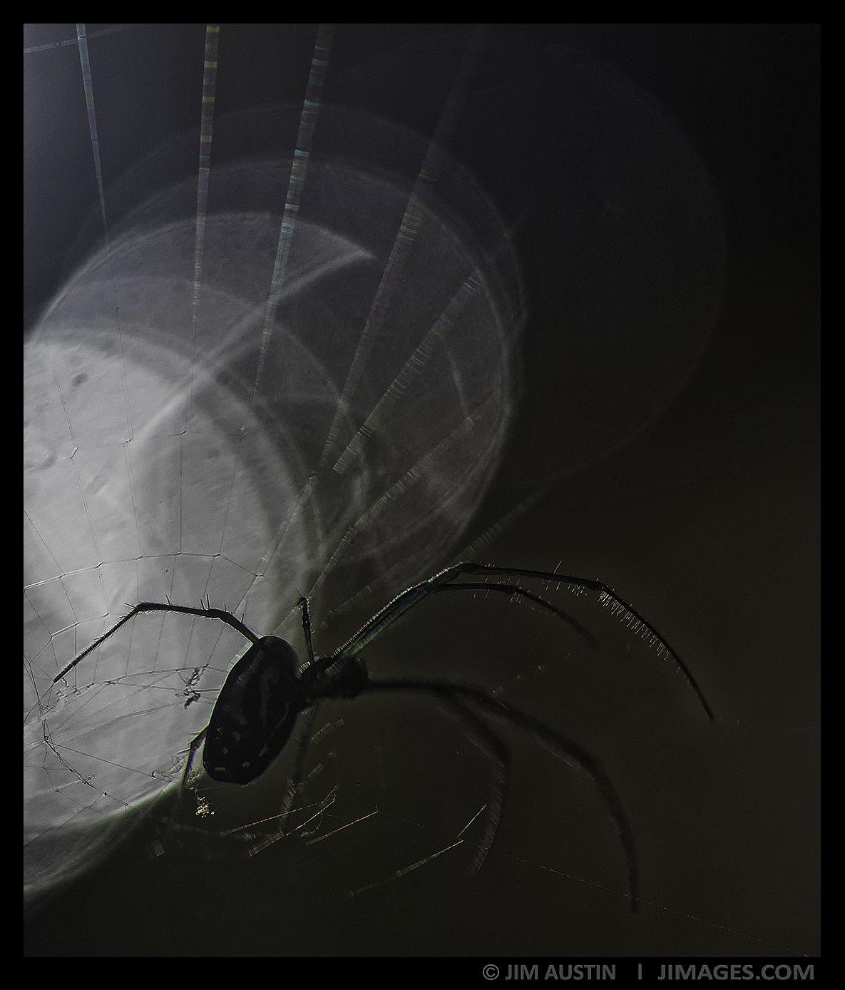 art-of-macro-spider-bokeh-jim-austin-jimagesdotcom