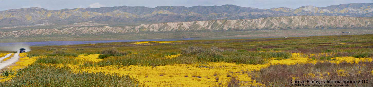 Small panorama photo of the yellow, red and purple spring flower colors on the Carrizo Plains and the San Andreas Fault in the background by Noella Ballenger.