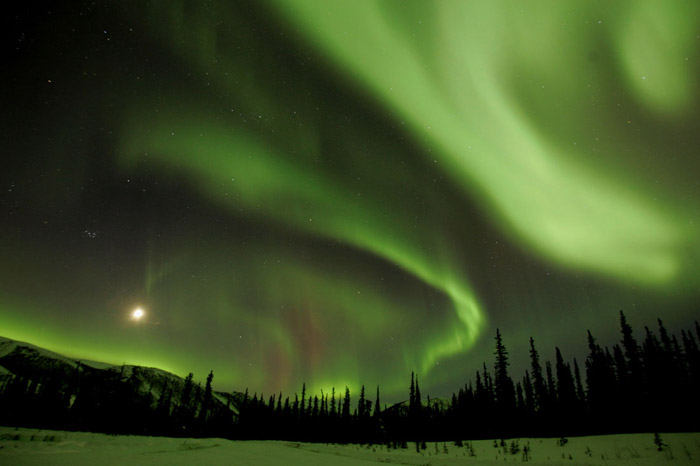 Photo of the Aurora Borealis in swirls of bright green with pine trees in the foreground in Alaska by Andy Long.