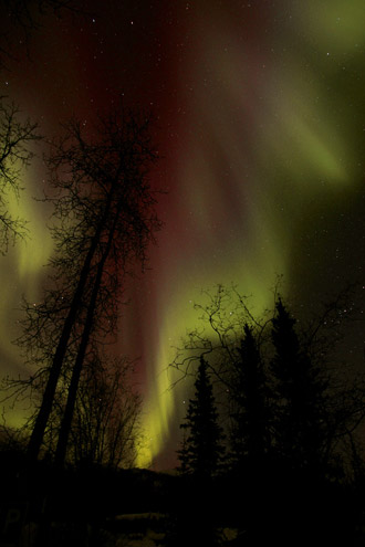 Photo of the Aurora Borealis in burgandy and green in Alaska by Andy Long