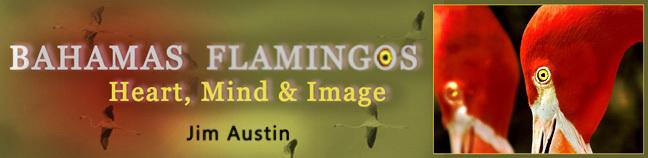 Bahamas Flamingos: Heart, Mind & Image by Jim Austin