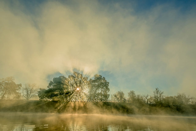 Landscape image of sun shining through a tree along the banks of the American River in Sacramento, California by Lewis Kemper.