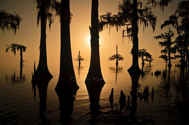 Landscape image of silhouetted Cypress trees in Louisiana by Lewis Kemper.