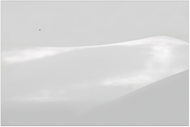 Photographing the Immaterial: gray scale image of rolling hills covered in snow with a single tiny tree entitled Highlander by Piero Leonardi.