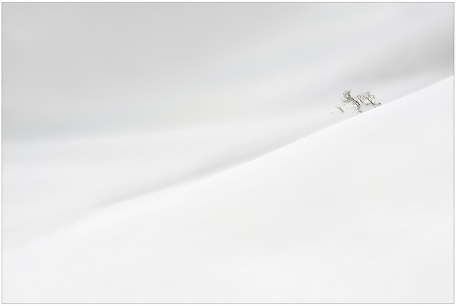 Photographing the Immaterial: gray scale image of rolling hills covered in snow with a single tree entitled Plodding Down by Piero Leonardi.