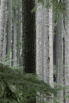 Trees in forest photo by Andy Long