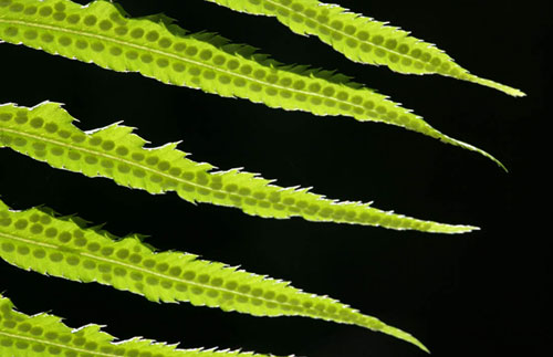 Close-up photo of leaves by Andy Long