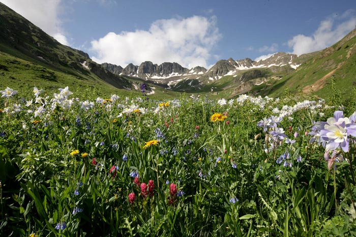 Photo of mountain scene with wildflowers by Andy Long