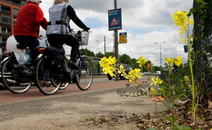 Biodiversity: photo of flower in the city of Rotterdam by Edwin Brosens