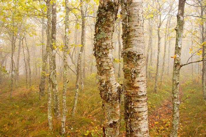 Autumn color photo of trees on Blue Ridge Parkway in North Carolina by Robert Hitchman