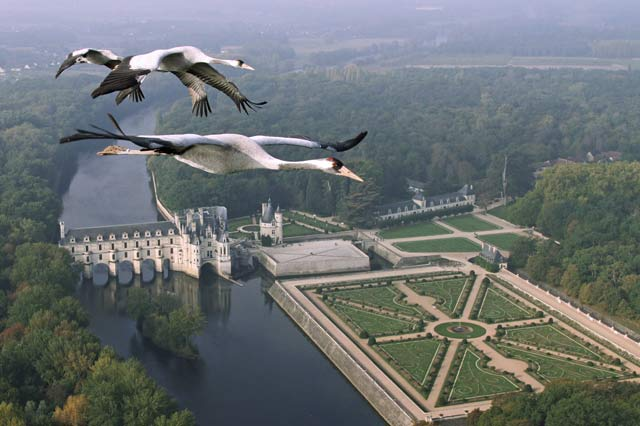 Episode Three – Europe. Common Cranes flying over Château Chenonceau, France.