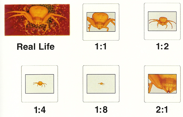 Graphic with images showing photo magnification by Nancy Rotenberg.
