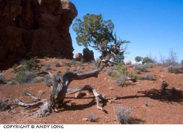 Photo design concepts: tree and rocks depicting shape in a photo by Andy Long.