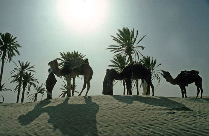 Photo of camels in Sahara Desert by Gert Wagner